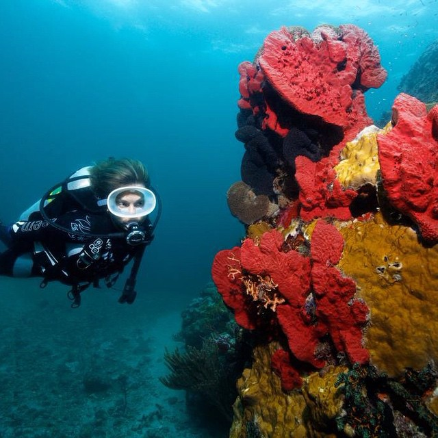Want to do some diving? Have a look at our Coral Kaleidoscope scuba package at #AnseChastanet! #luxury #travel #ocean #diving #beauty #nature #fish #wildlife #resort