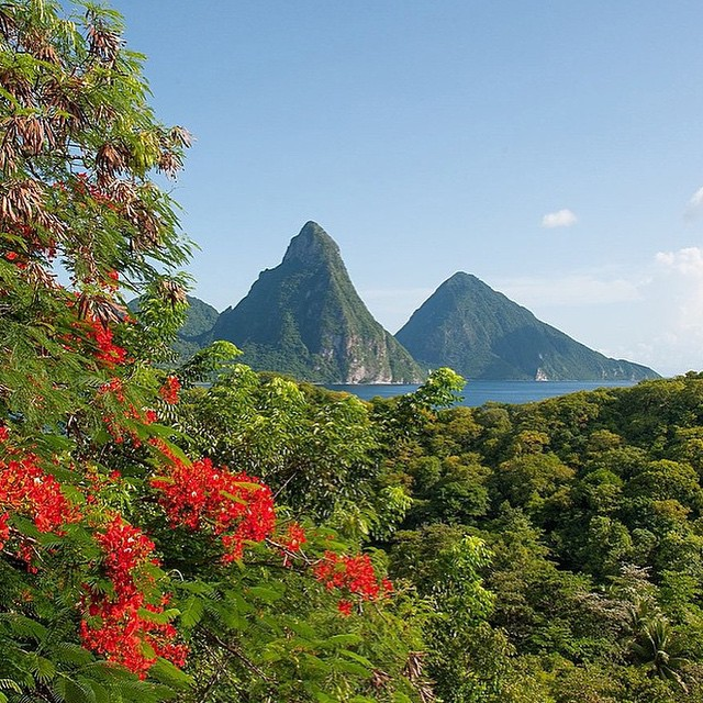 The colors of paradise. #luxury #travel #beauty #ansechastanet #pitons #sunshine #weekend #stlucia #flowers #color #bliss #regram @mikkelpaige